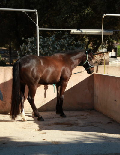 installations_douche_avec_cheval_vers_carrieres